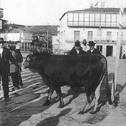 Un ejemplar digno de amparo. Foto D. Antonio Núñez Díaz. Archivo del autor.